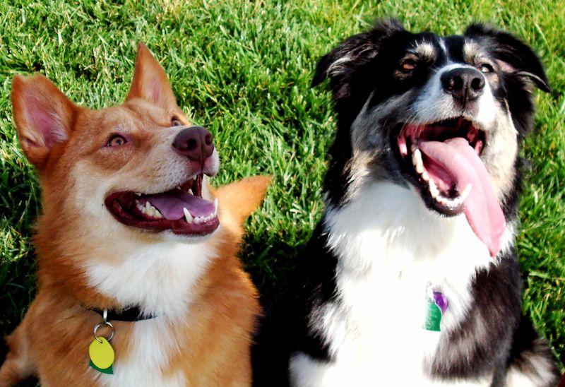 Ziggy and Tara